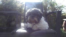 Małego psa obsiadanie w słońcu zbiory wideo