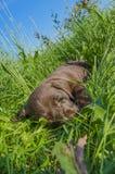 Małego psa potrzeba spać Zdjęcia Royalty Free