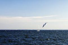 Małego statku regatta w Gdynia zatoki późnym popołudniu na Wrześniu 29, Polska Obrazy Royalty Free