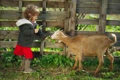 Małej dziewczynki żywieniowa kózka w ogródzie obraz stock