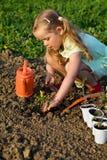 Małej dziewczynki flancowania pomidoru rozsady zdjęcie royalty free