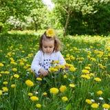 Małej dziewczynki gromadzenia się koloru żółtego łąkowy dandelion Fotografia Royalty Free