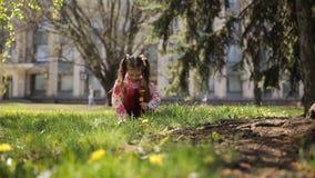 Małej dziewczynki zrywania dandelions w parku zdjęcie wideo