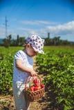 Małej dziewczynki zrywania truskawki przy polem w Węgry zdjęcie royalty free