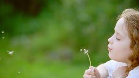 Małej kędzierzawej dziewczyny podmuchowy dandelion zbiory