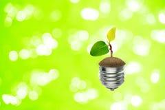 Małej zieleni flancy drzewny przyrost w żarówce z bokeh światłem w tle obraz royalty free