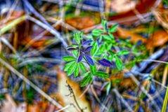 Małej zieleni flancy Młode rośliny Zdjęcia Royalty Free