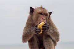 Małp jeść Obraz Stock