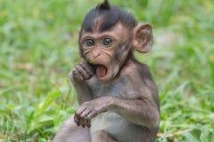 Małp jeść Zdjęcia Stock
