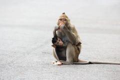 Małp jeść Obrazy Royalty Free
