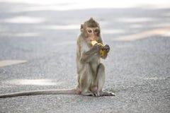 Małp jeść Obrazy Stock