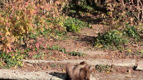 Małp podejścia przerwa i liście frankfurt magistrala Germany zbiory
