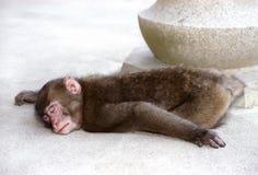 małpa śpi Zdjęcia Royalty Free