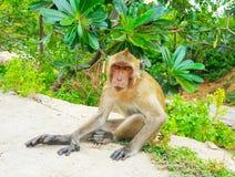 Małpa żyje w lesie, Tajlandia śliczny zwierzę obraz royalty free
