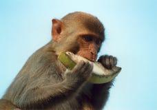 małpa zdjęcia royalty free
