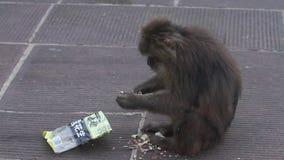 Małpa zdjęcie wideo