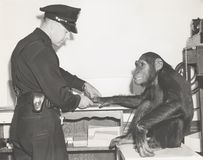 Małpa fingerprinted funkcjonariuszem policji obraz royalty free