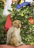 Małpa i modlitwa zaznaczamy od Swayambunath świątyni w Kathmandu zdjęcia royalty free