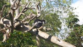 Małpa Na strażniku Fotografia Stock