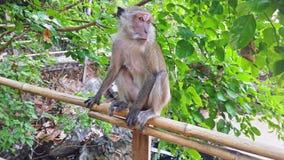 Małpa od drzewa w zielonym dżungla lesie zbiory