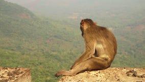 Małpa ogląda nad dżunglą w India zbiory