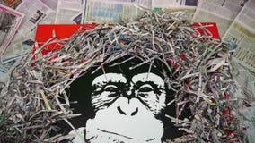Małpa otaczająca gazetowymi ścinkami zbiory wideo
