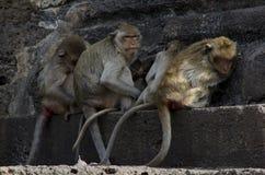 Małpa przy antyczną świątynią Obrazy Stock