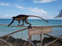 małpa przy barem obraz stock