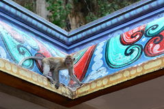 Małpa przy Batu jam hinduską świątynią Gombak, Selangor Malezja Fotografia Royalty Free