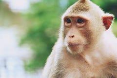 Małpa przy Khao Kheow Otwartym zoo, Pattaya Tajlandia zdjęcia royalty free