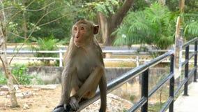 Małpa siedzi na poręczu ogrodzenie przy zoo Tajlandia zbiory wideo