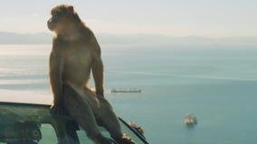 Małpa siedzi na samochodzie na słonecznym dniu z Gibraltar na tle zbiory