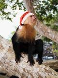 Małpa w Święty Mikołaj czerwonym kapeluszu Zdjęcia Royalty Free