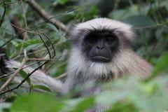 Małpa w dżungli Obrazy Royalty Free