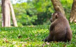 Małpa w dżungli fotografia royalty free