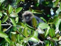 Małpa w drzewach obraz stock