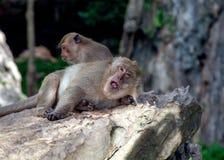 Małpa w Krabi Thailand/zwierzęciu obrazy royalty free