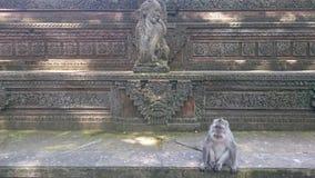 Małpa w małpim lesie Zdjęcia Royalty Free
