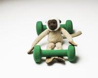 Małpa z dwa dumbbells dla sprawności fizycznej (sprawności fizycznej pojęcie) Zdjęcia Royalty Free