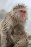 małpi śnieg Zdjęcia Royalty Free