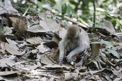 małpi dziecko szuka na ziemi obraz royalty free