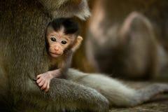 Małpi dziecko w Ubud Bali obraz stock