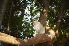małpi dziki Zdjęcia Stock