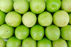 Małpi jabłko Zdjęcie Stock