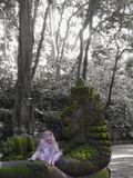 Małpi las obraz stock