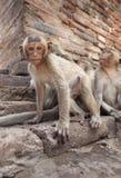 Małpi młodzieniec Obraz Stock