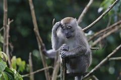 Małpi myśliciele Zdjęcie Royalty Free