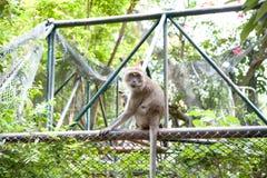Małpi na zewnątrz klatki Zdjęcia Royalty Free