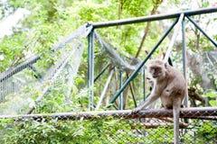 Małpi na zewnątrz klatki Zdjęcie Stock