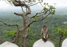 Małpi obsiadanie i łasowanie zdjęcia royalty free